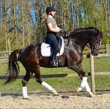 skinnende hest