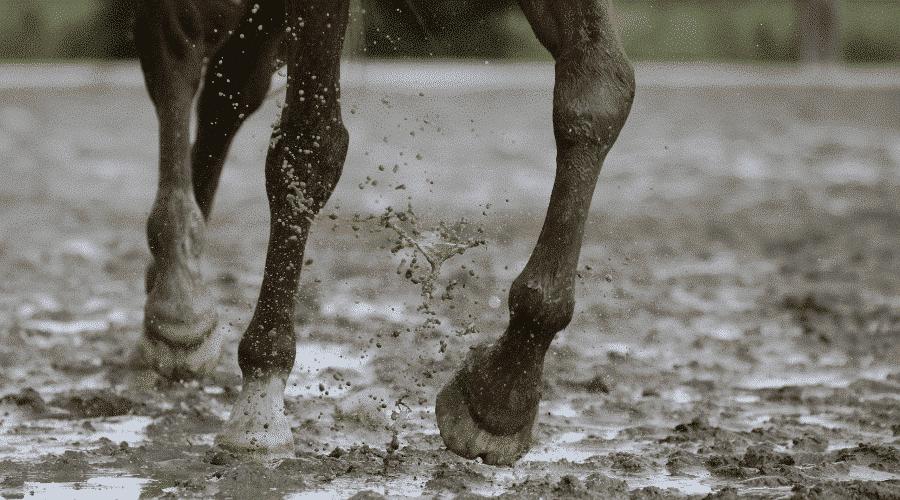 horse mud