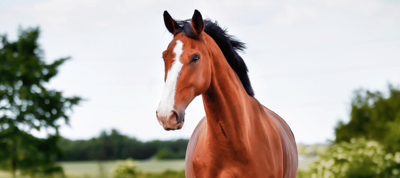 equus Cura